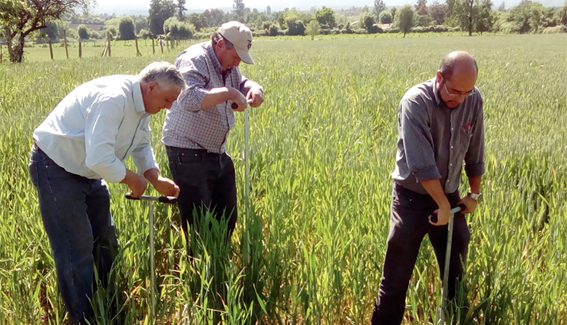 Investigadores crean dispositivo para mejorar cosechas